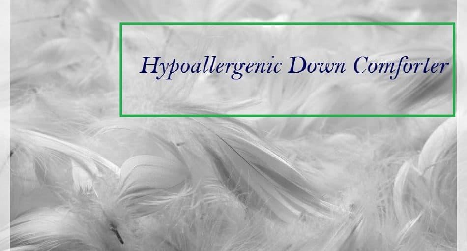 Best Hypoallergenic Down Comforter